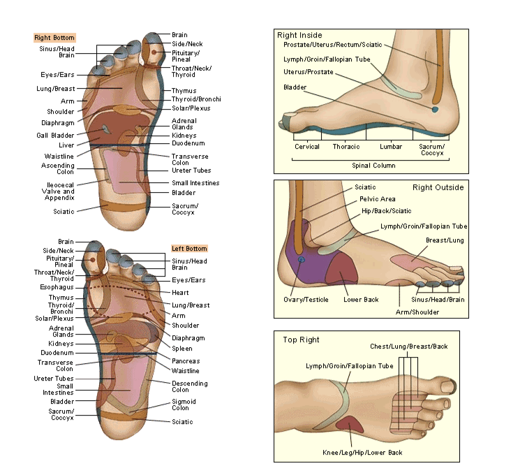 Parts of the bottom of the foot